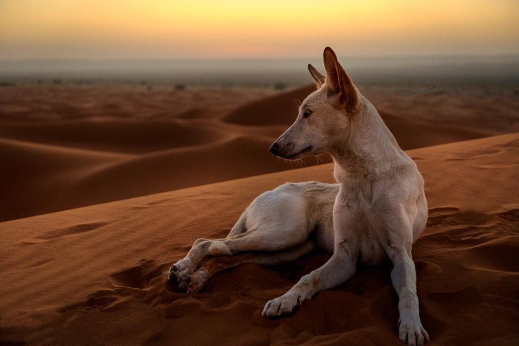 February Fresh - Desert Dog